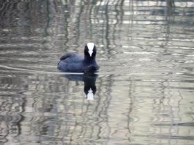 2012-11-02 lago endine 035