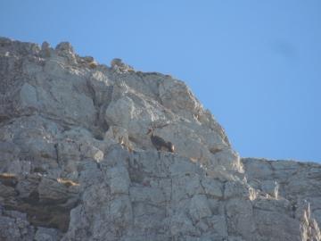 2013-11-13 valle scura Vigna Vaga 003