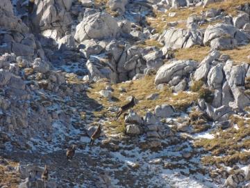 2013-11-13 valle scura Vigna Vaga 040