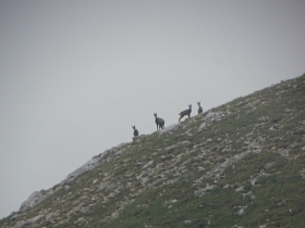 2017-06-14 Valle Scura e Ferrante (18)