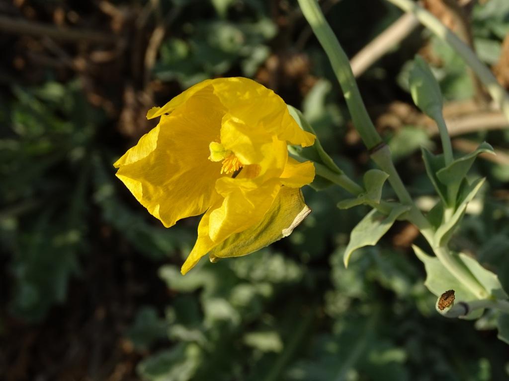 2021-09-06-fiori-Scerne-di-Pineto-63