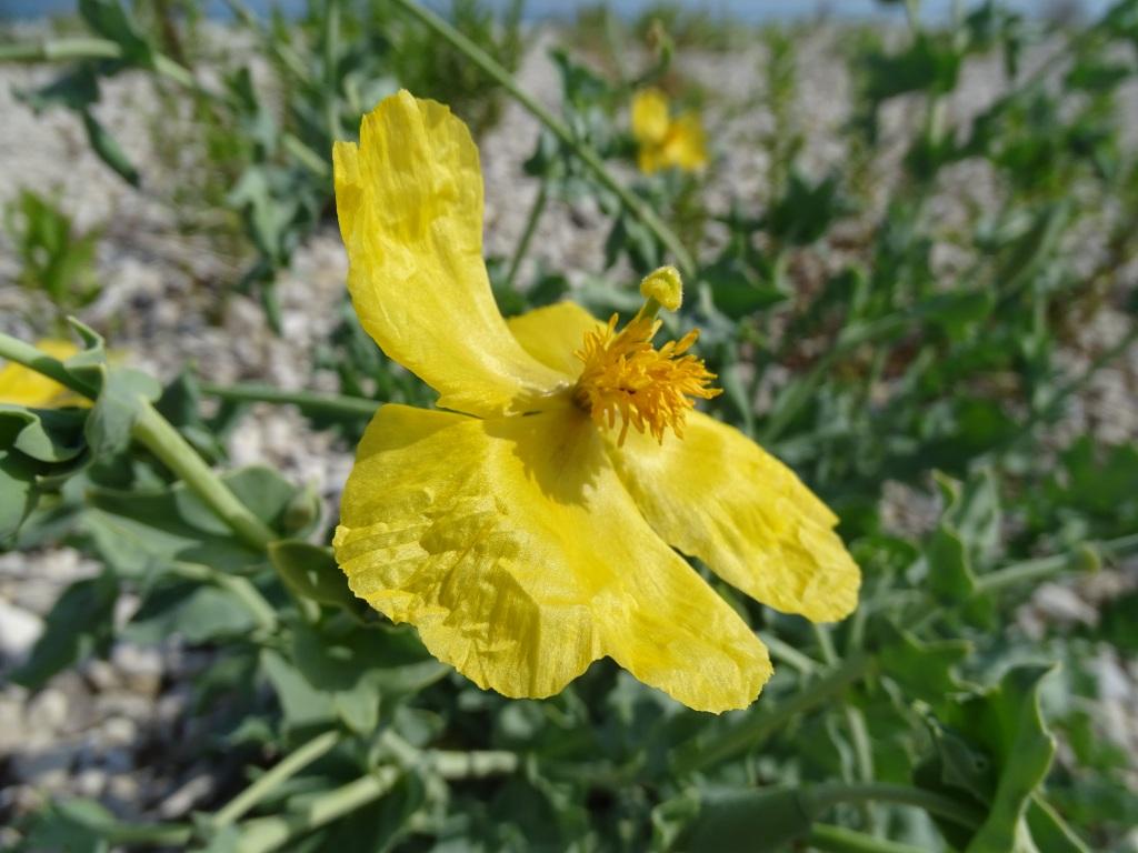 2021-09-08-fiori-Scerne-di-Pineto-11