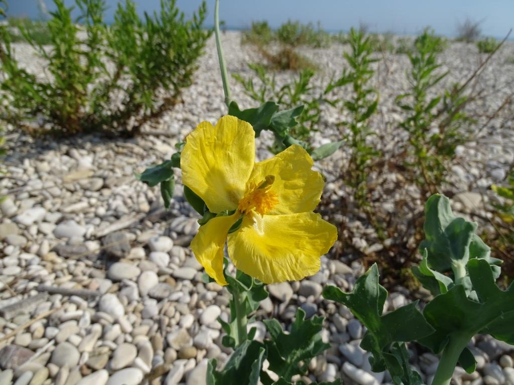 2021-09-08-fiori-Scerne-di-Pineto-12