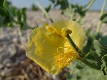 2021-09-06-fiori-Scerne-di-Pineto-70