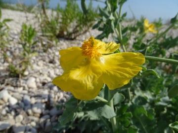 2021-09-08-fiori-Scerne-di-Pineto-10