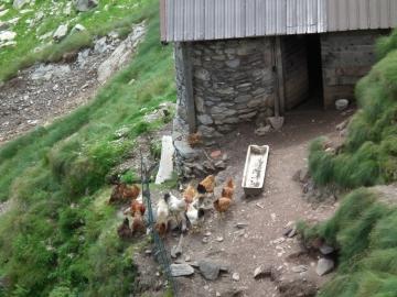 2011-07-20 sentiero Curò 067