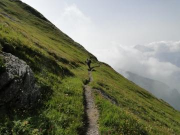 2011-08-03 Tagliaferri e sentiero Curò 070