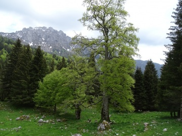 2021-05-29-Valscura-32