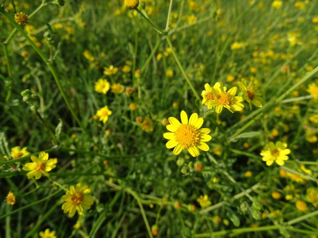 2021-09-06-fiori-Scerne-di-Pineto-25