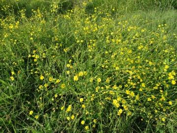 2021-09-06-fiori-Scerne-di-Pineto-26