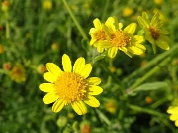 2021-09-06-fiori-Scerne-di-Pineto-28
