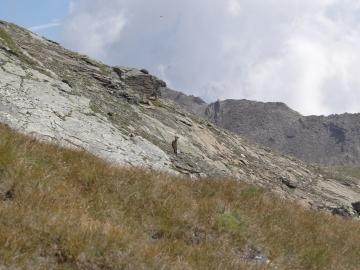 08 2015-07-19 Val Martello 003