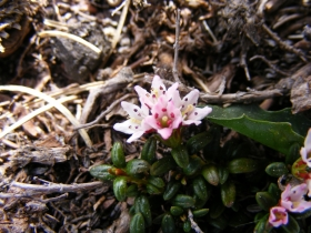 2009-05-24 Piz Tri 005