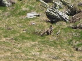 2009-05-27 sasso maurone 264