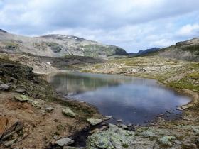 2018-07-10 laghi della Forcola e Primula integrifolia 060