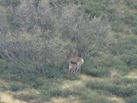 2012-09-30 Valgrande cervi 012