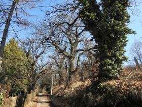 2018-03-14 monte Cordespino e forte S.Marco 044