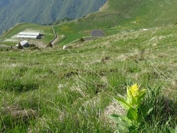 2021-06-05-monte-Guglielmo-33