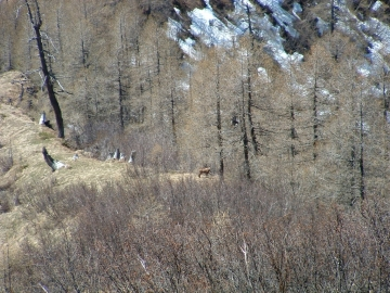 2005-05-21 Lavanech (17).jpg