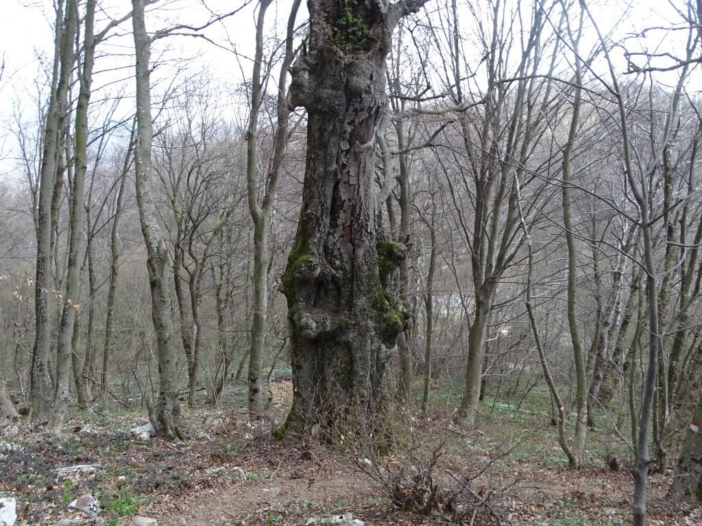 2021-04-03-monte-Predosa-60