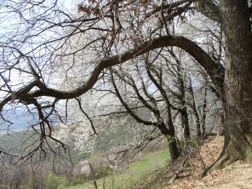 2021-04-03-monte-Predosa-65