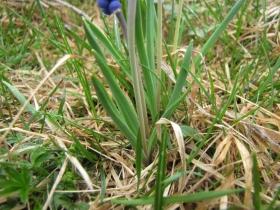 2010-05-30 rifugio olmo 041