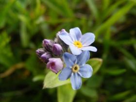 2008-06-21 fiori Valle delle Messi 036