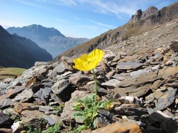 2009-09-30 passo Bondione e Pizzo tre Confini 019