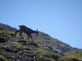 2018-09-09 cima Palon Roite (35)