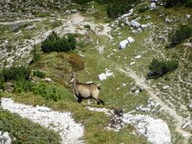 2018-09-09 cima Palon Roite (63)