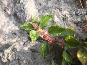 2014-04-02  salita alla Pieve Tremosine 095