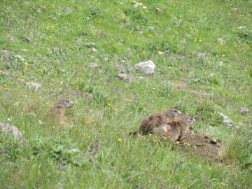 2012-07-04 passo del frate monte corona 115.jpg