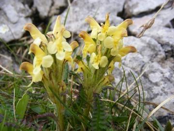 2009-06-07 Monte Caplone 035