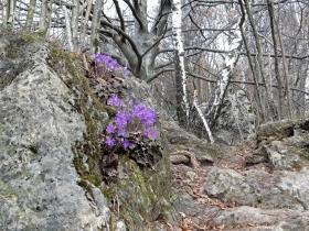 2018-04-08 Pizzo Cerro e Castel Regina 020a