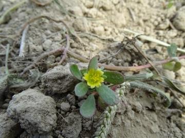 2021-09-08-fiori-Scerne-di-Pineto-24