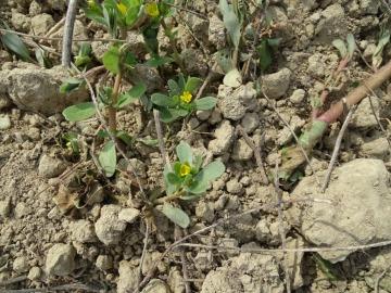 2021-09-08-fiori-Scerne-di-Pineto-47
