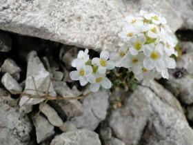 2011-05-14 Tremalzo_Ampola 026