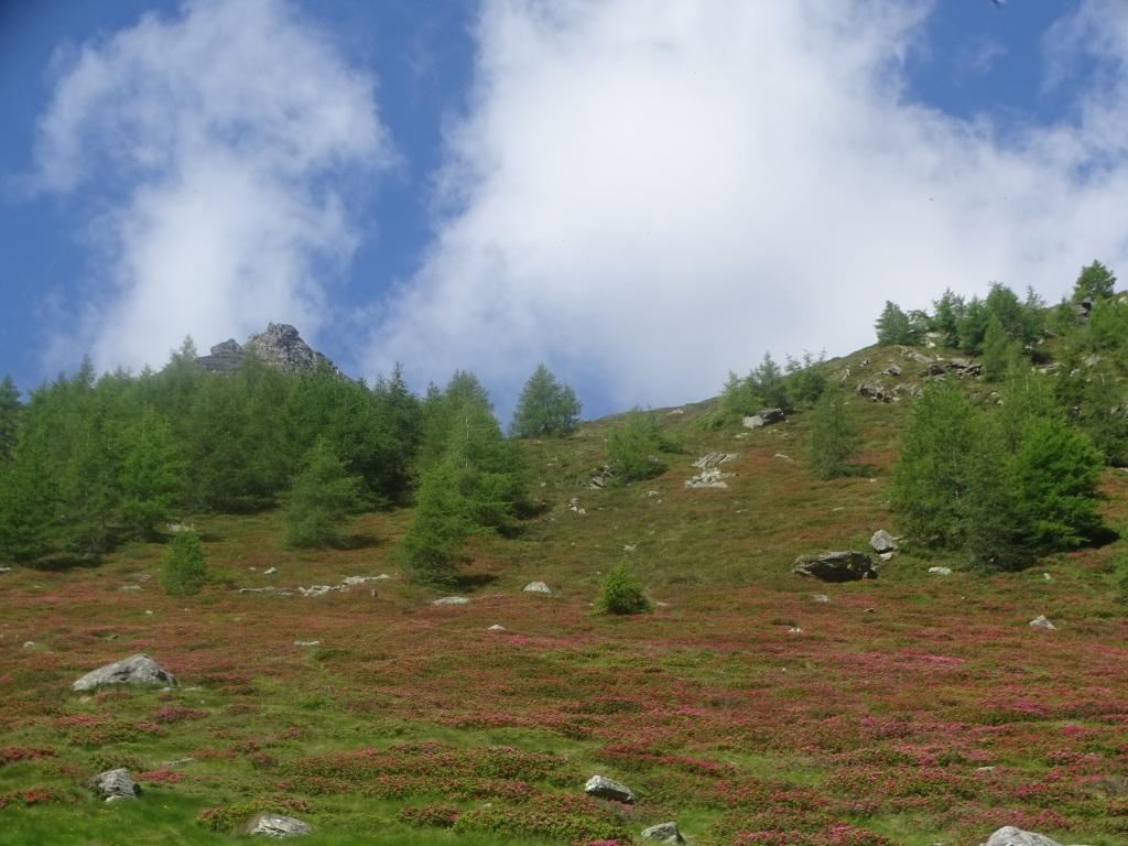 2020-06-28-valle-Monticelli-13