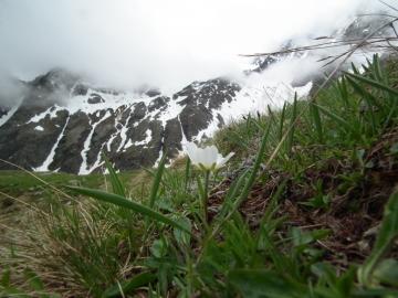 2011-06-12 cervi e marmotte al linge 127