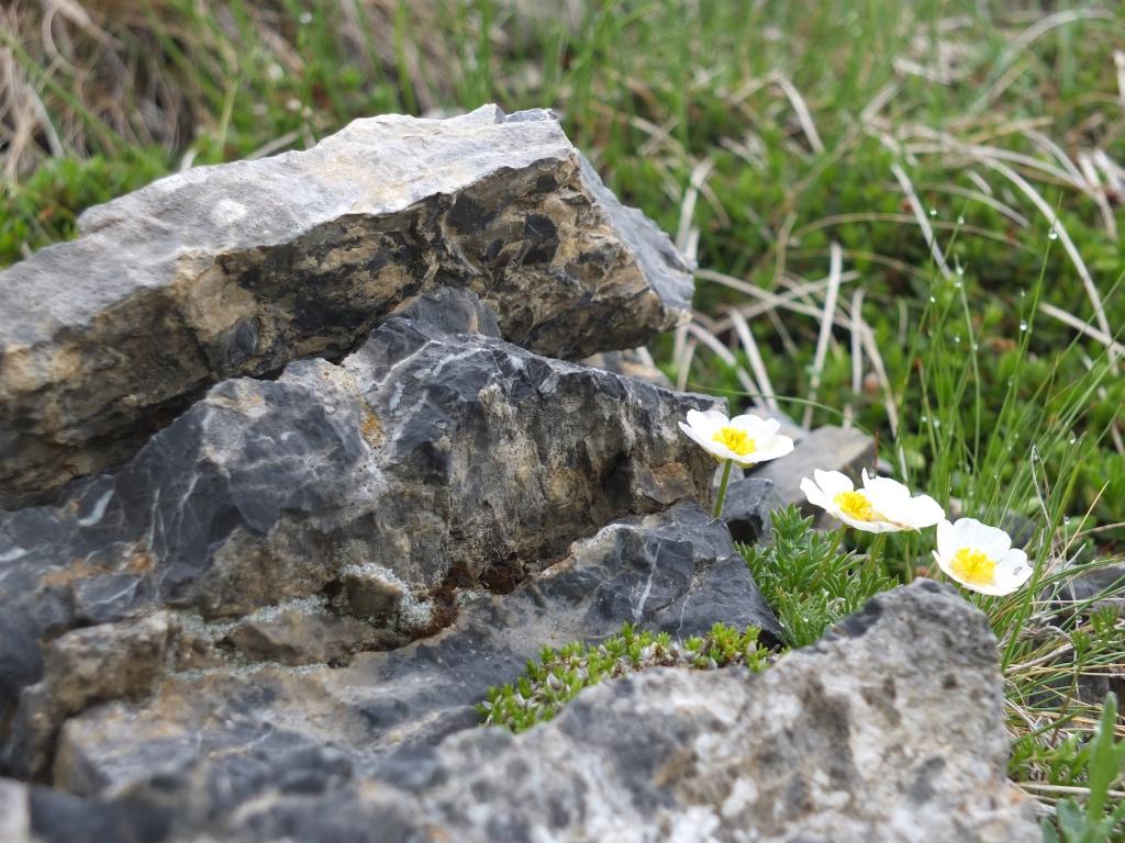 2012-06-09 Crocedomini helvetica 061