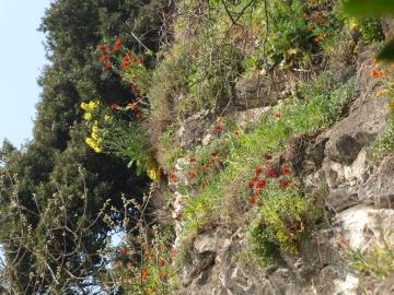 2014-04-02  salita alla Pieve Tremosine 097