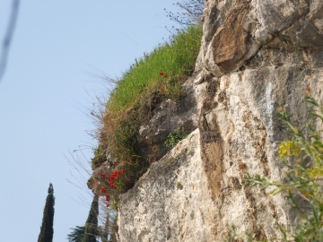 2014-04-02  salita alla Pieve Tremosine 098