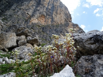 2017-07-08 monte Mulaz 175