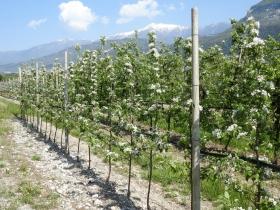 2018-04-22 sentiero degli Scaloni Dro Ceniga (188)
