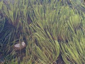 cima dossoni  laghi seroti 06-08-07 072