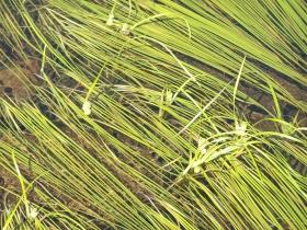 dossoni  laghi seroti 06-08-07 007