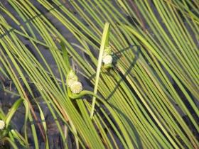 dossoni  laghi seroti 06-08-07 010