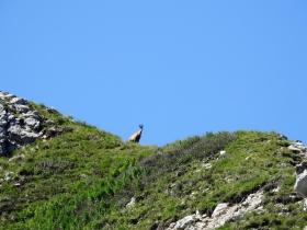 2018-07-18 cima Valdritta 007