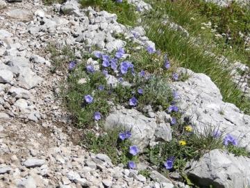 06 2011-07-31 Il Camino camuno 004