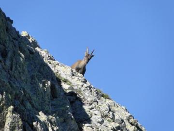 18 2012-08-07  Monte Aga e Podavit 004